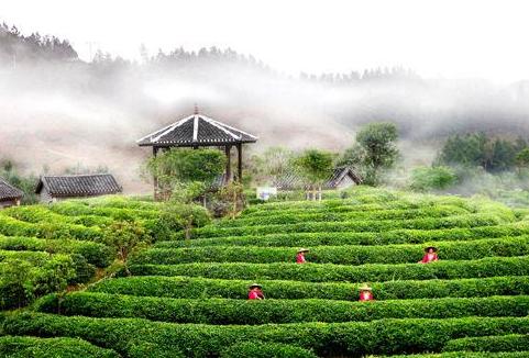 临桂刘三姐茶园