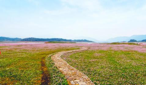 桂林最美草原花海,桂林百亩紫云英花海惊艳绽放!地址详细攻略。