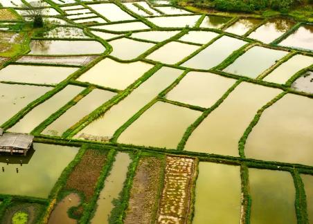 桂林会仙玻璃田,景区修好了,已经开始营业了。